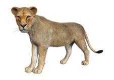 kvinnligt lejon för tolkning 3D på vit vektor illustrationer