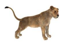 kvinnligt lejon för tolkning 3D på vit Royaltyfria Bilder