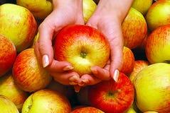 Kvinnligt räcker hållande Apple Fotografering för Bildbyråer