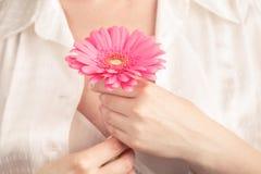 Kvinnligt sjukvårdbegrepp, gerbera för floower för handhåll rosa Royaltyfria Bilder
