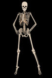 Kvinnligt skelett- mode poserar med den snabba banan Fotografering för Bildbyråer