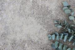 Kvinnligt utformat materielfoto Blom- sammansättning av den gröna silverdollareukalyptuns lämnar och förgrena sig konkret grunge royaltyfri fotografi