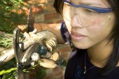 kvinnligträdgårdsmästare royaltyfri foto