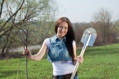 kvinnligträdgårdsmästare som planterar treen Royaltyfri Bild