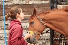 Kvinnor ger ett äpple till henne hästen Royaltyfria Bilder
