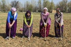 Kvinnor i fältet Royaltyfri Bild