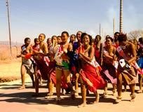 Kvinnor i traditionella dräkter som marscherar på Umhlanga aka Reed Dance 01-09-2013 Lobamba, Swaziland Arkivbilder