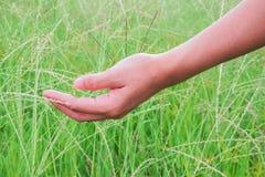 Kvinnor med gräs i beta i aftonen Royaltyfri Fotografi