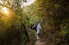 Kvinnor på att fotvandra tur i skog av Himaayas Royaltyfri Fotografi