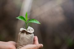 Kvinnor räcker att rymma växande plantor i påsar för fertil jord som planterar träd för att förminska global uppvärmning, royaltyfria foton