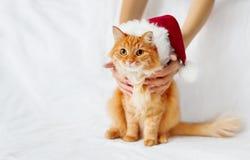 Kvinnor rymmer den ljust rödbrun katten i röd julhatt Royaltyfria Bilder
