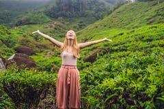 Kvinnor som är turist- på en tekoloni Naturliga utvalda nya teblad i te brukar i Cameron Highlands, Malaysia royaltyfri fotografi