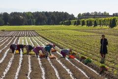 Kvinnor som arbetar i fältet Royaltyfria Foton