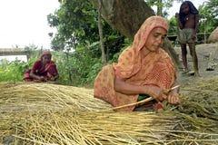 Kvinnor som arbetar i jutebransch i Tangail, Bangladesh Arkivbild