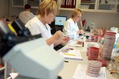 Kvinnor som arbetar i labbet Royaltyfri Foto