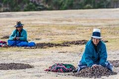 Kvinnor som samlar peruanen Anderna Cuzco P för morayaChincheros stad royaltyfri fotografi