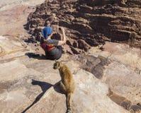 Kvinnor tar fotoet på högt ställe av offret Petra jordan Arkivfoton