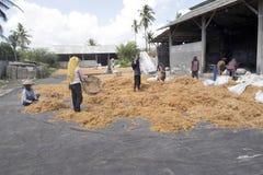 Kvinnor torkade havsväxt, Nusa Penida, Indonesien royaltyfria bilder