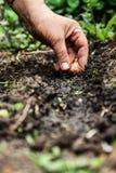 Kvinnors handsadi i jord-jord blommakulor Närbild begreppsnolla Royaltyfria Foton