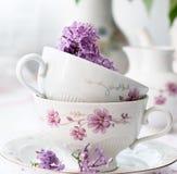 Kvist av lilan i en kopp Arkivbilder