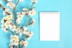 Kvistar av aprikosträdet med blommor på blå bakgrund Begreppet av våren kom arkivbild