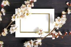 Kvistar av aprikosträdet med blommor på blå bakgrund Begreppet av våren kom fotografering för bildbyråer