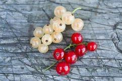 Kvistar av den vita och röda vinbäret Royaltyfri Fotografi