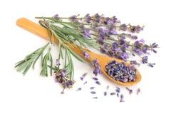 Kvistar av ny lavendel och som torkar i sked på vit bakgrund Royaltyfria Bilder
