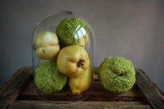 Kvitten, citron och Osage apelsin Royaltyfria Foton