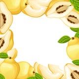 Kvitten med hela sidor och skivor av kvitten Vektorillustration av kvitten Vektorillustration för den dekorativa affischen, emble Arkivfoto