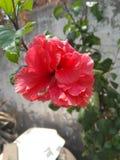 Kvittrar blomman royaltyfria foton