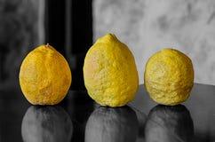Kwaśnej żółtej cytryny dzikiej rośliny skóry składnika lemoniady ustalony naturalny nierówny marszczący tradycyjny owocowy deser fotografia stock