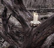 Kwade kaarsen op de boom in het bos Royalty-vrije Stock Foto