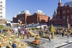 Kwadrat, dekorujący z składami warzywa i kwiaty Zdjęcia Stock