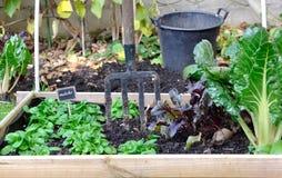 Kwadrat dla jarzynowego ogródu Obraz Stock