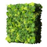 Kwadrat robić od zieleń liści odizolowywających na białym tle 3 d czynią Fotografia Royalty Free