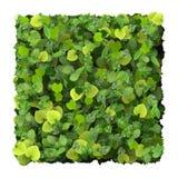 Kwadrat robić od zieleni opuszcza na białym tle Obrazy Royalty Free
