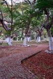 Kwadrat z czerwonymi kwiatami Obrazy Royalty Free