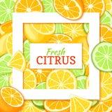 Kwadratowa biel rama i prostokąt etykietka na cytrus cytryny wapna tła pomarańczowym wektorze gręplujemy ilustrację Tropikalny i Obrazy Royalty Free