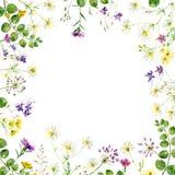 Kwadratowa rama kwiaty ilustracja wektor