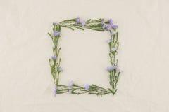 Kwadratowa rama robić od purpurowych krajaczy kwiatów Zdjęcie Royalty Free