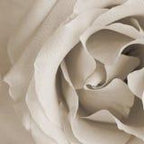 Kwadratowa rocznik tekstura z wzrastał Fotografia Stock