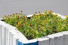 Kwadratowego betonu kamienia kwiatu stary mizeracki brzydki Radziecki łóżko malujący z wybielaniem, rosjanina krajobrazu projekt obrazy royalty free
