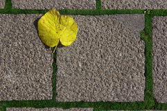 Kwadratowy chodniczek z żółtym urlopem 2 zdjęcie stock