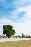 kwadratowy drzewo Zdjęcie Stock