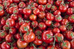 Kwalitatieve achtergrond van tomaten Verse tomaten Rode tomaten De organische tomaten van de dorpsmarkt Royalty-vrije Stock Fotografie