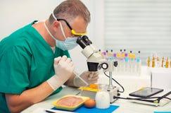 Kwaliteitscontrole het deskundige inspecteren bij kippeneieren stock afbeeldingen