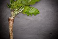 Kwaliteitsmierikswortel, zwarte steenachtergrond stock afbeelding
