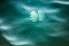 Kwallen die in het Overzees zwemmen Royalty-vrije Stock Afbeelding