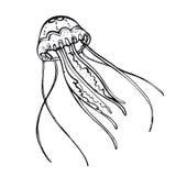 kwallen Hand-drawn inwoner van de onderwaterwereld Royalty-vrije Stock Fotografie